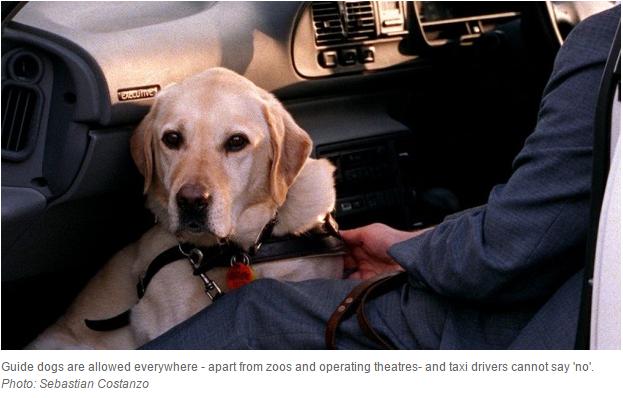 Dog in Cab